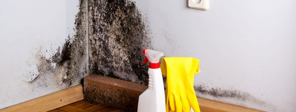 wall with mold and cleaning solution and gloves for DIY cleaning | by McMahon Services and Construction of Chicago, Arlington Heights, Berwyn, Des Plaines, Evanston, Grayslake, Mundelein, Libertyville, and Skokie, IL