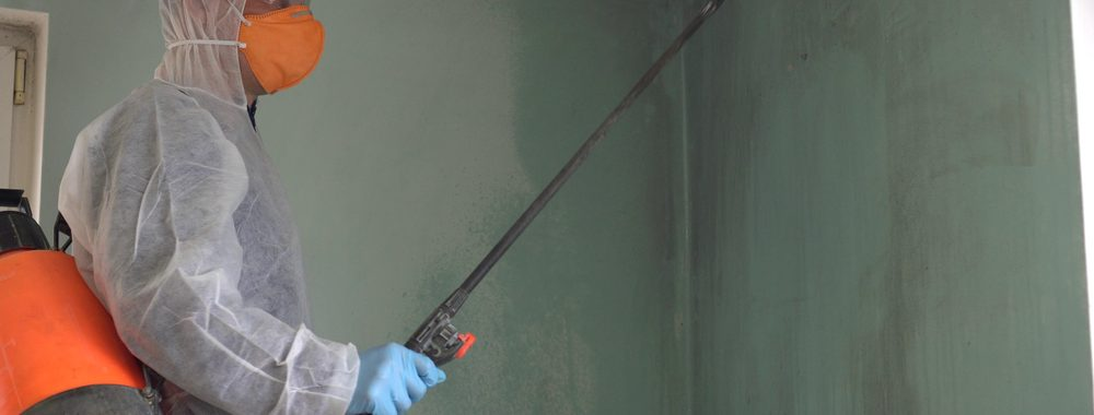 whta is Mold remediation services